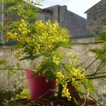 fleurs0008